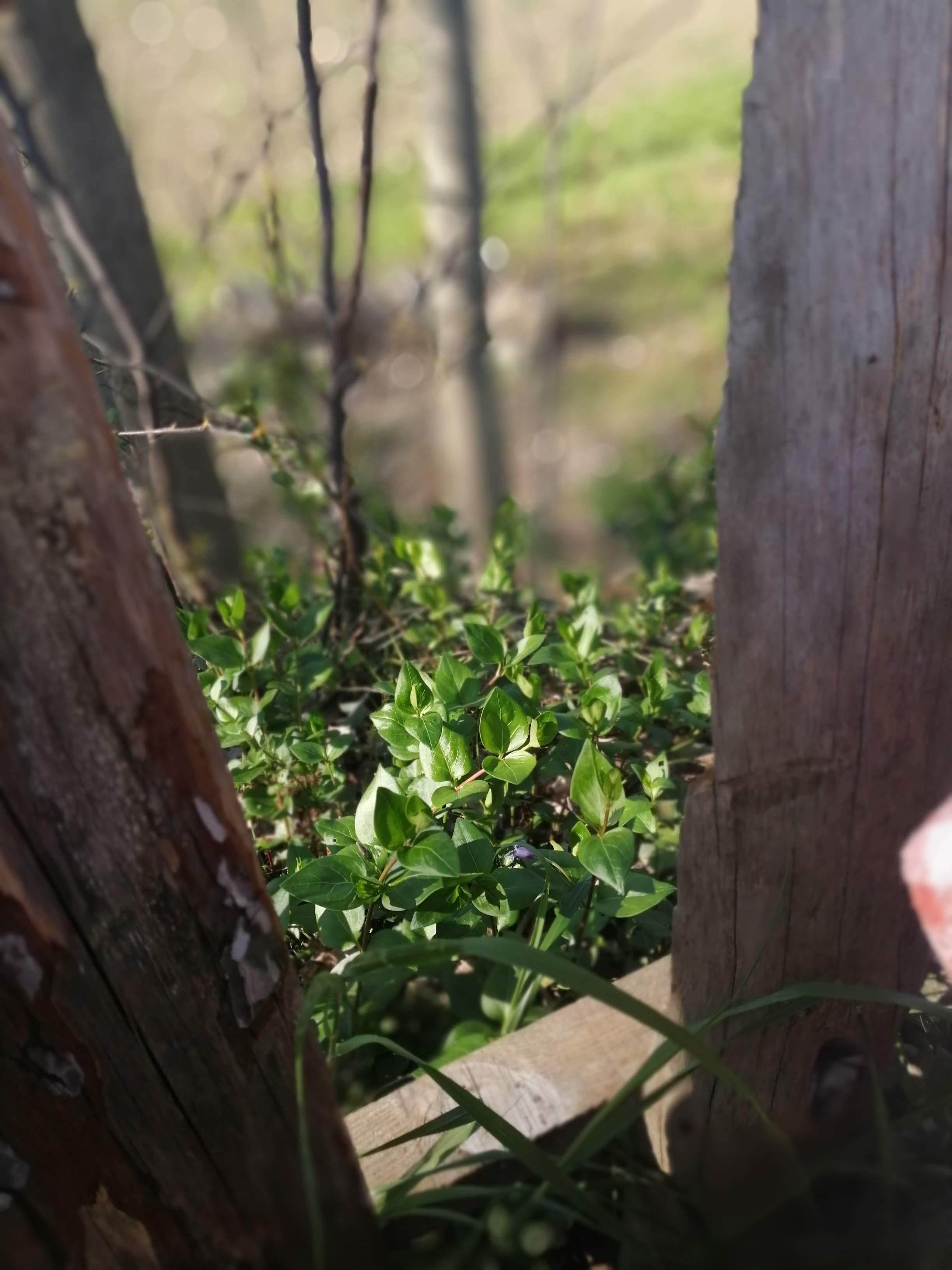 Artemis Enginar Restoran Seferihisar bahçe tomurcuklar